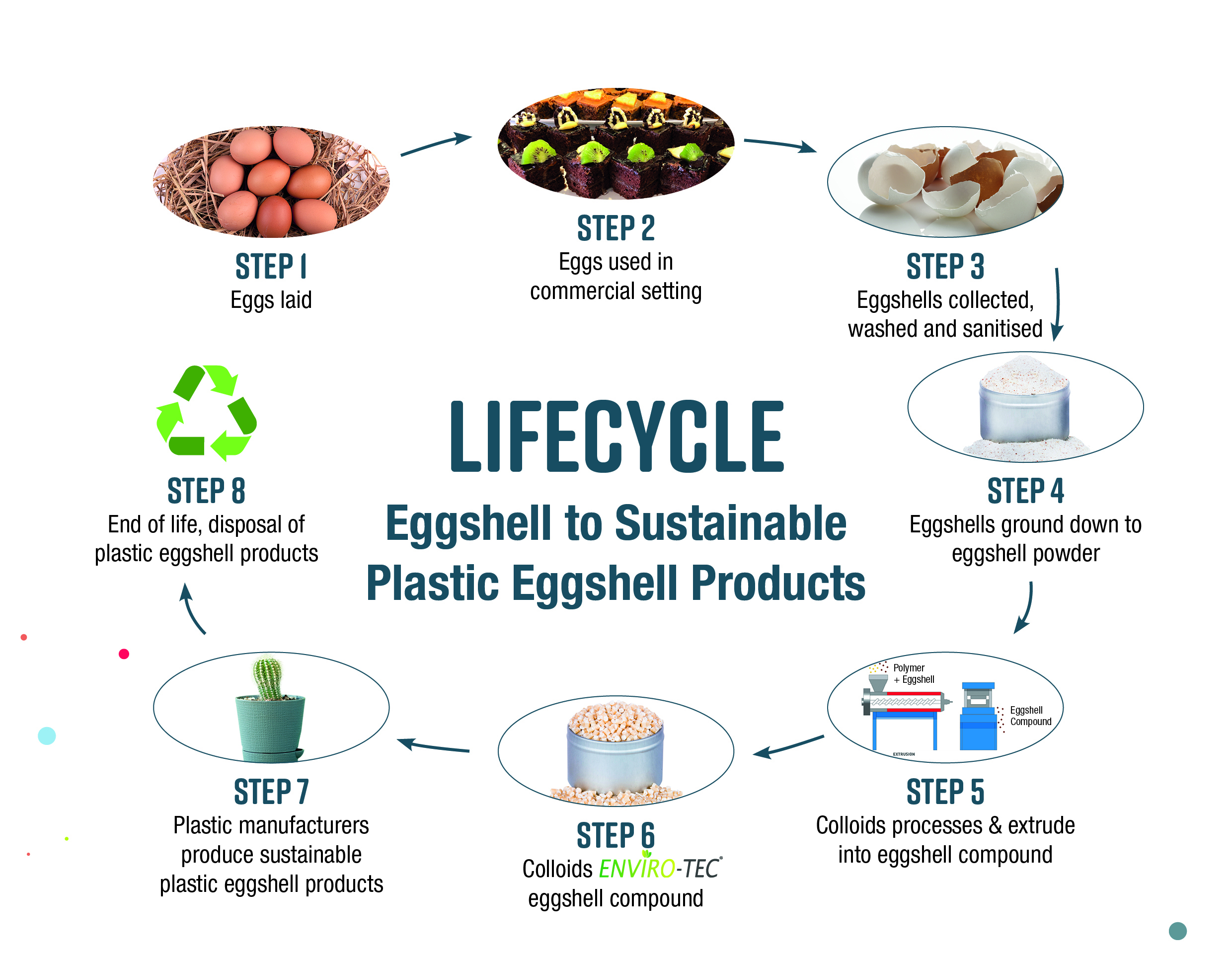 Lifecycle - Eggshell to Sustainable Plastic Eggshell Products